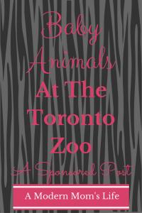 Baby Animals At The Toronto Zoo