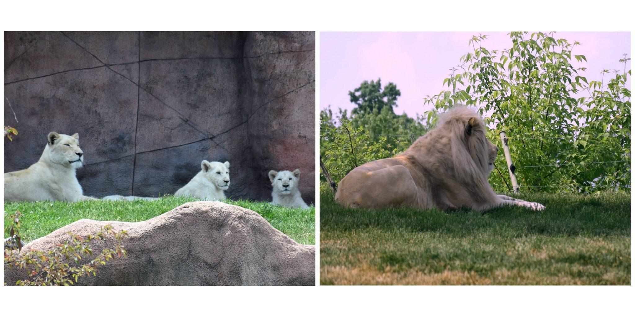 Baby Animals Collage3