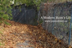 Leaves and Fence