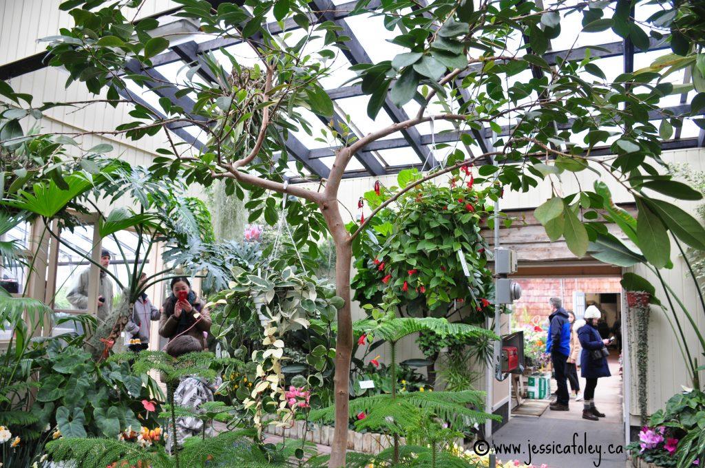 Kingston Greenhouse