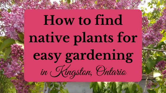 native plants Kingston