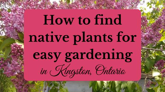 native plants Kingston